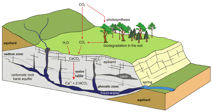 the above diagram shows a general schematic of the carbon dioxide –  bicarbonate cycle within the epikarstic, vadose and phreatic zones